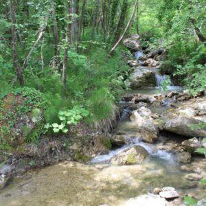 Un ruscello di montagna tra i boschi del versante teramano